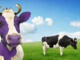 Becoming a 'Purple Cow' One Tweet at aTime